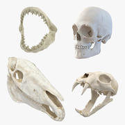 Skulls 3D Models Collection 2 3d model