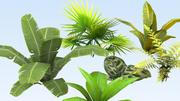 Pacote de vegetação tropical 3d model
