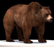 Urso marrom 3d model