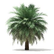Butia Palm Tree 3D Model 4m 3d model