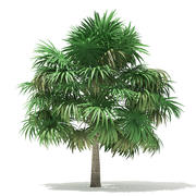 Thatch Palm Tree 3D模型5m 3d model
