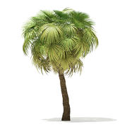 California Palm Tree 3D Model 7.5m 3d model