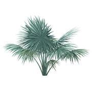 Palmeira em Prata 3D Modelo 2m 3d model