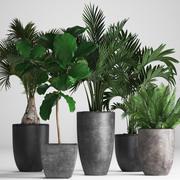 Collection Plantes exotiques 3d model