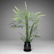 대나무 식물 3D 3d model