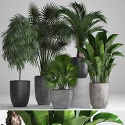 Kolekcja egzotycznych roślin w doniczkach 3d model