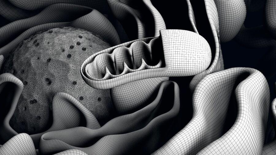 动物细胞3D royalty-free 3d model - Preview no. 20
