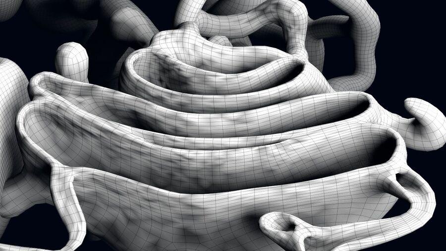 动物细胞3D royalty-free 3d model - Preview no. 13