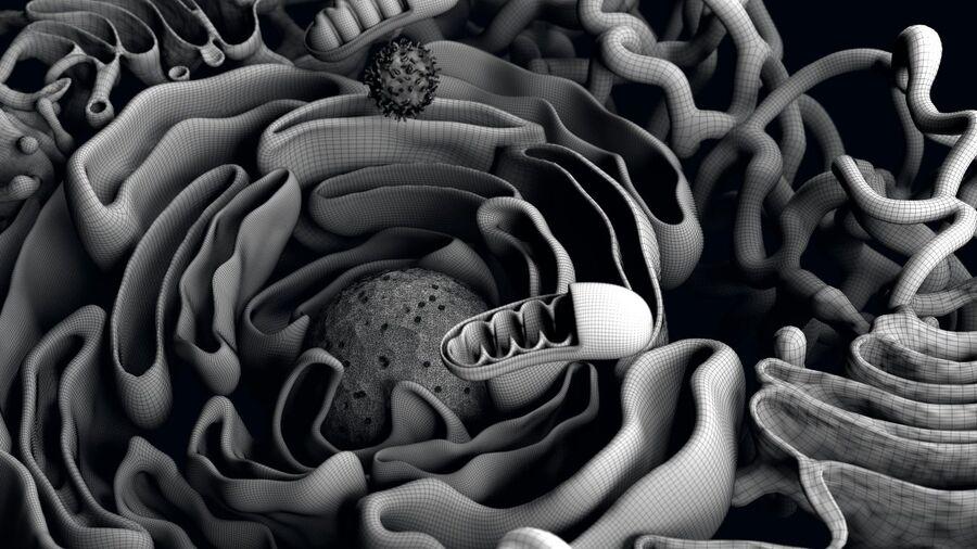 动物细胞3D royalty-free 3d model - Preview no. 12
