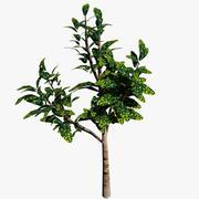 Planta ornamental 001 3d model