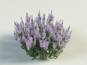 Ling Heather Calluna 3d model