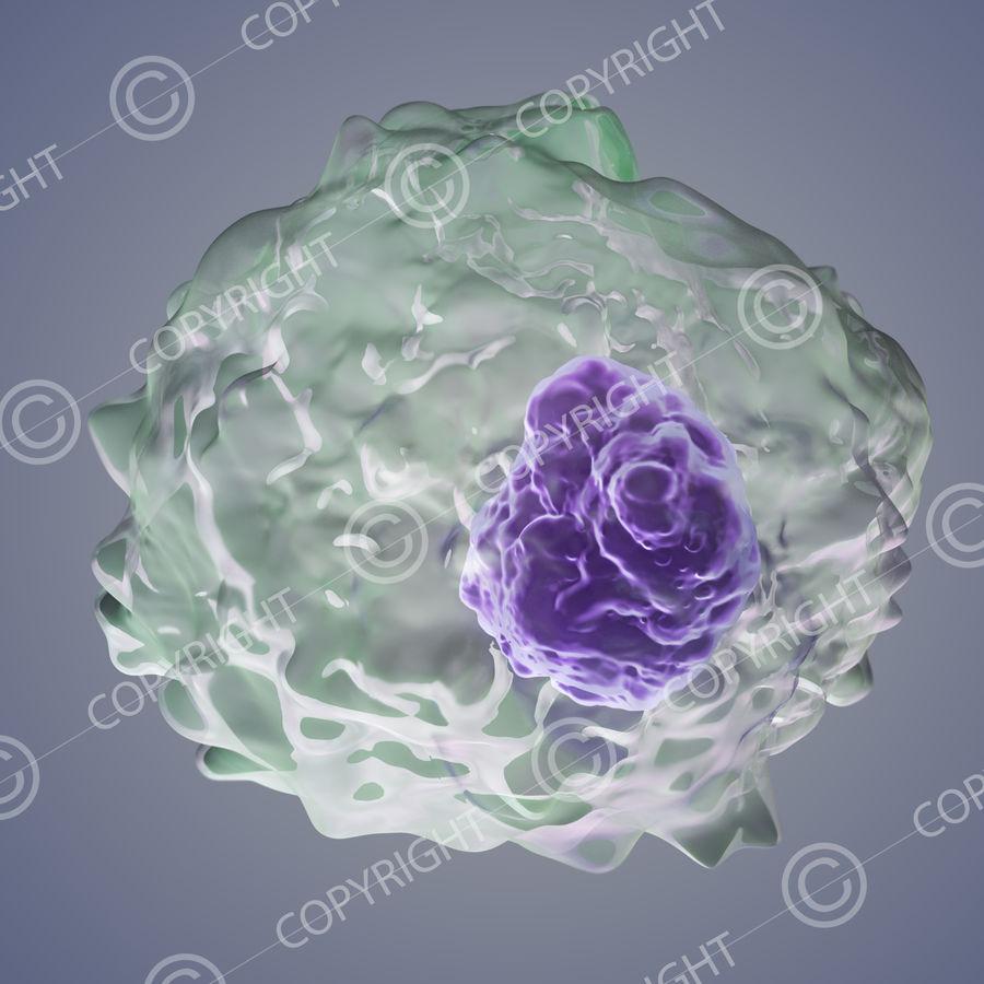 makrofag royalty-free 3d model - Preview no. 2