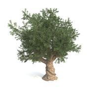 Zeytin ağacı 3d model