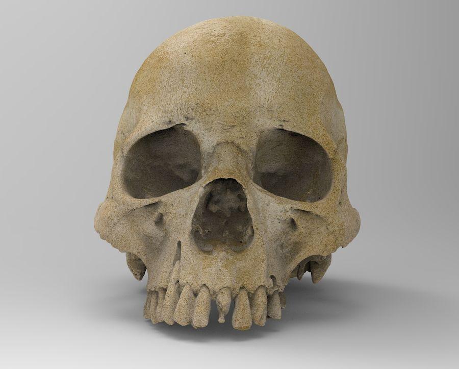 Череп Скелет Человек Голова royalty-free 3d model - Preview no. 5