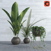 Plants collection POP01 3d model