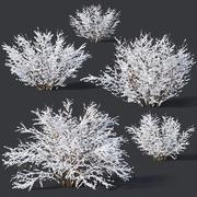 Forsythia # 9. Winter. 7 sizes 3d model