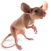 Mouse operato 3d model