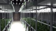 Cannabis Grow Room 3d model