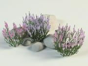 Лин Хизер Каллуна набор 3d model