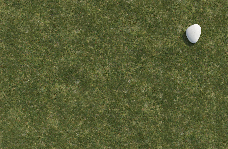 Field Grass royalty-free 3d model - Preview no. 6
