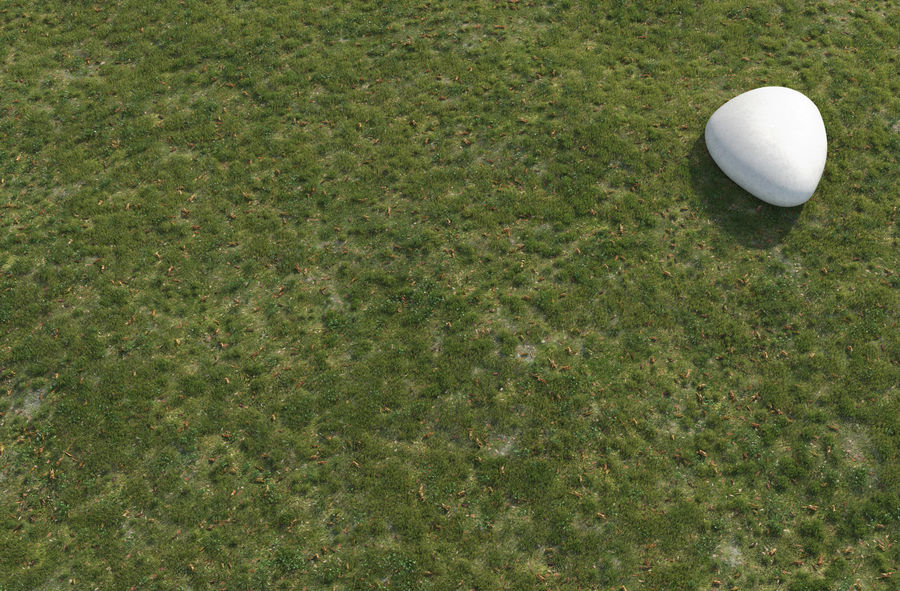 Field Grass royalty-free 3d model - Preview no. 5