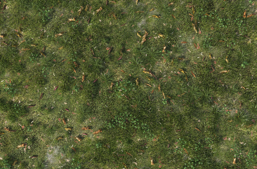 Field Grass royalty-free 3d model - Preview no. 7
