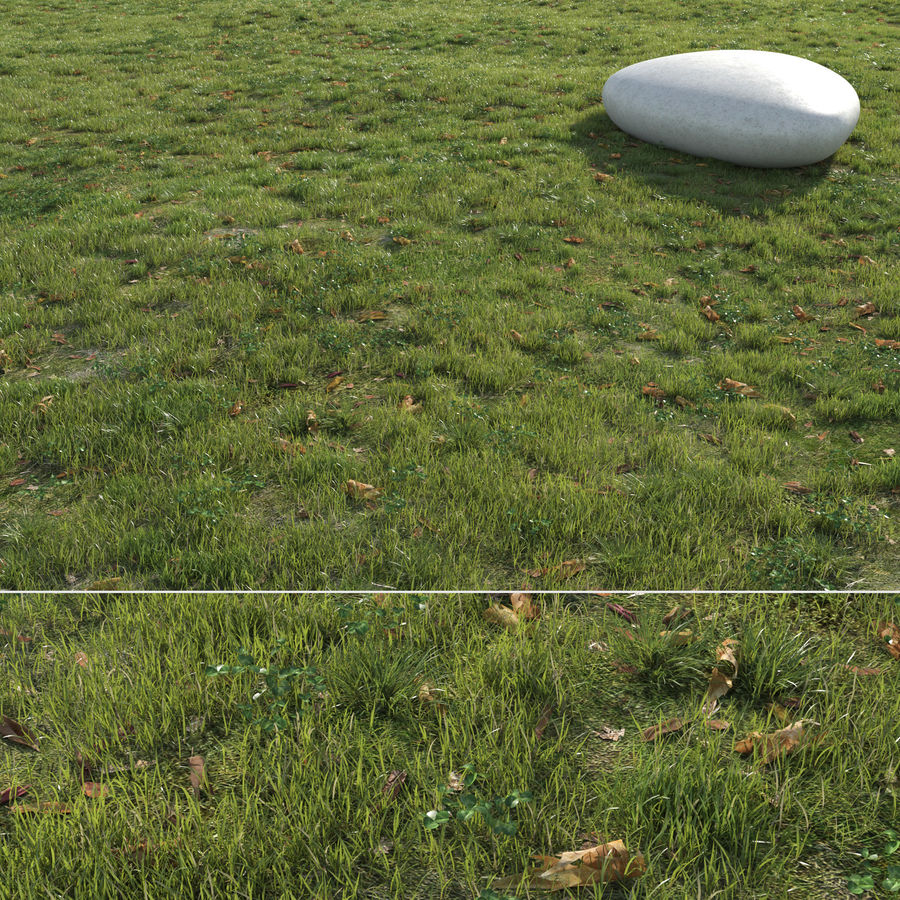 Field Grass royalty-free 3d model - Preview no. 1