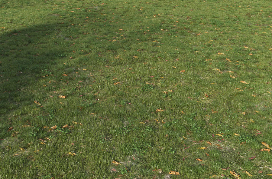 Field Grass royalty-free 3d model - Preview no. 4