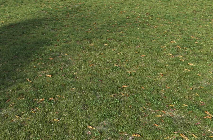 Campo de hierba royalty-free modelo 3d - Preview no. 4