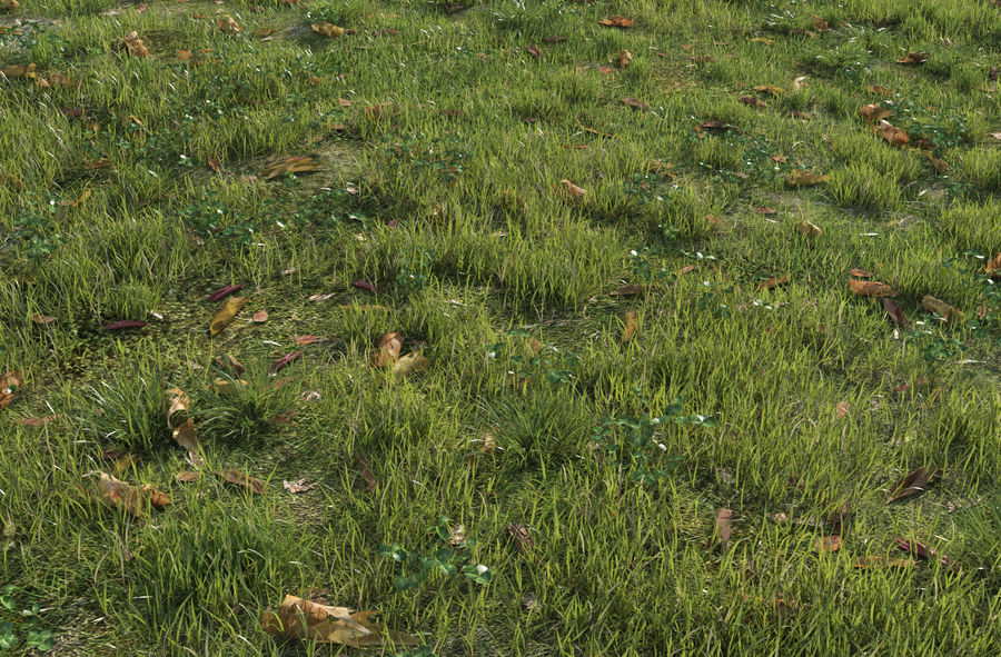 Field Grass royalty-free 3d model - Preview no. 3
