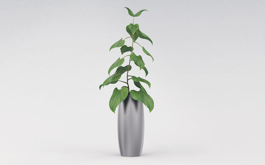 Plante en pot royalty-free 3d model - Preview no. 6