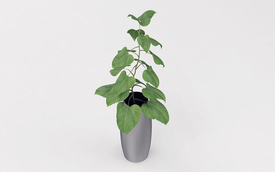 Plante en pot royalty-free 3d model - Preview no. 3