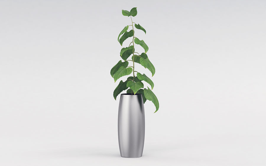 Plante en pot royalty-free 3d model - Preview no. 8