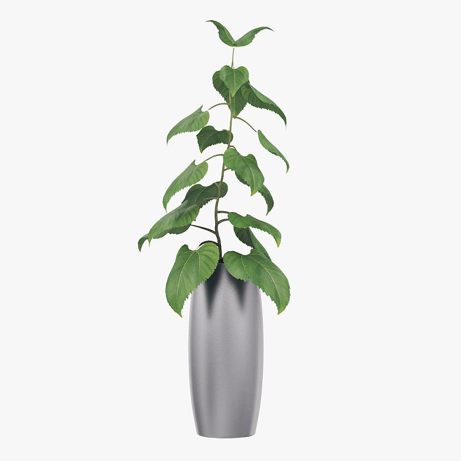 Plante en pot royalty-free 3d model - Preview no. 1