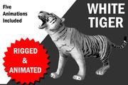 Tigre bianca con animazione 3d model