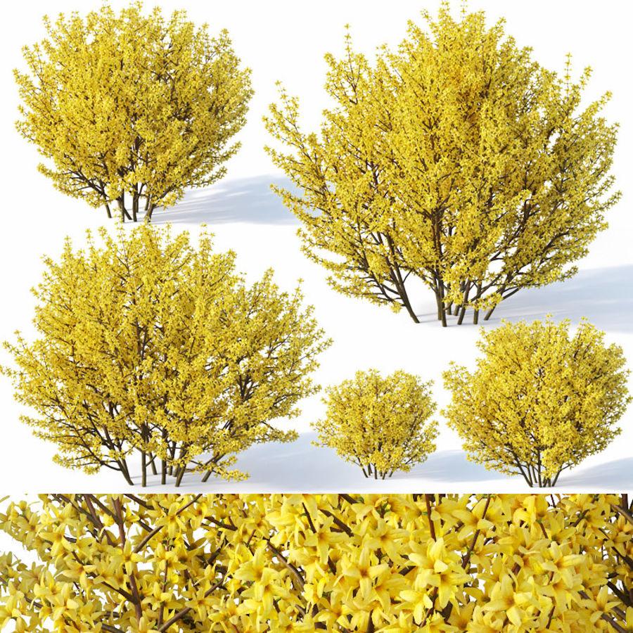 Forsítia 7 arbustos + 2 sebes royalty-free 3d model - Preview no. 2