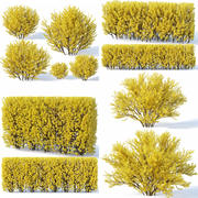 Forsythia 7 bushes + 2 hedges collection 3d model