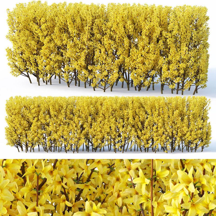 Forsítia 7 arbustos + 2 sebes royalty-free 3d model - Preview no. 4
