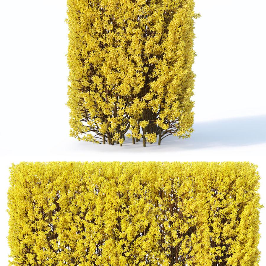 Forsítia 7 arbustos + 2 sebes royalty-free 3d model - Preview no. 7