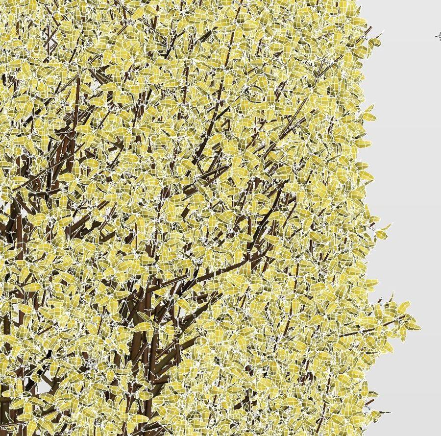 Forsítia 7 arbustos + 2 sebes royalty-free 3d model - Preview no. 10