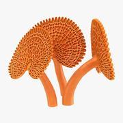 Orange Pore Fungus 3d model