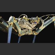Monster Crab 3d model