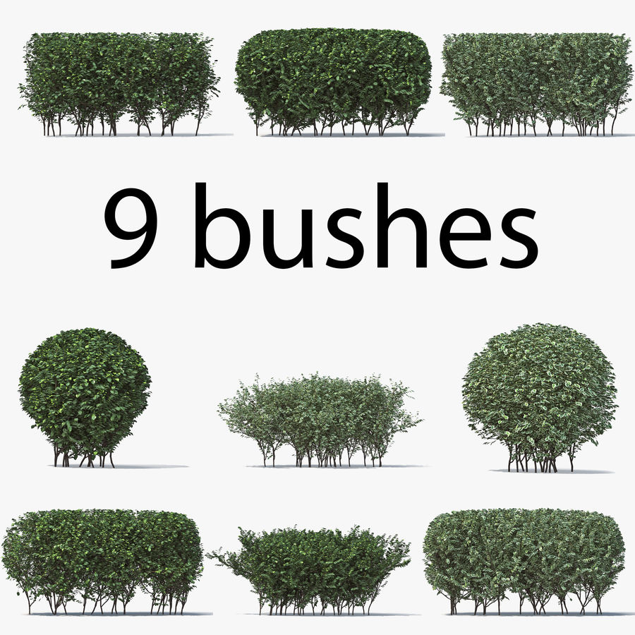 Boxwood (buxus) royalty-free 3d model - Preview no. 1
