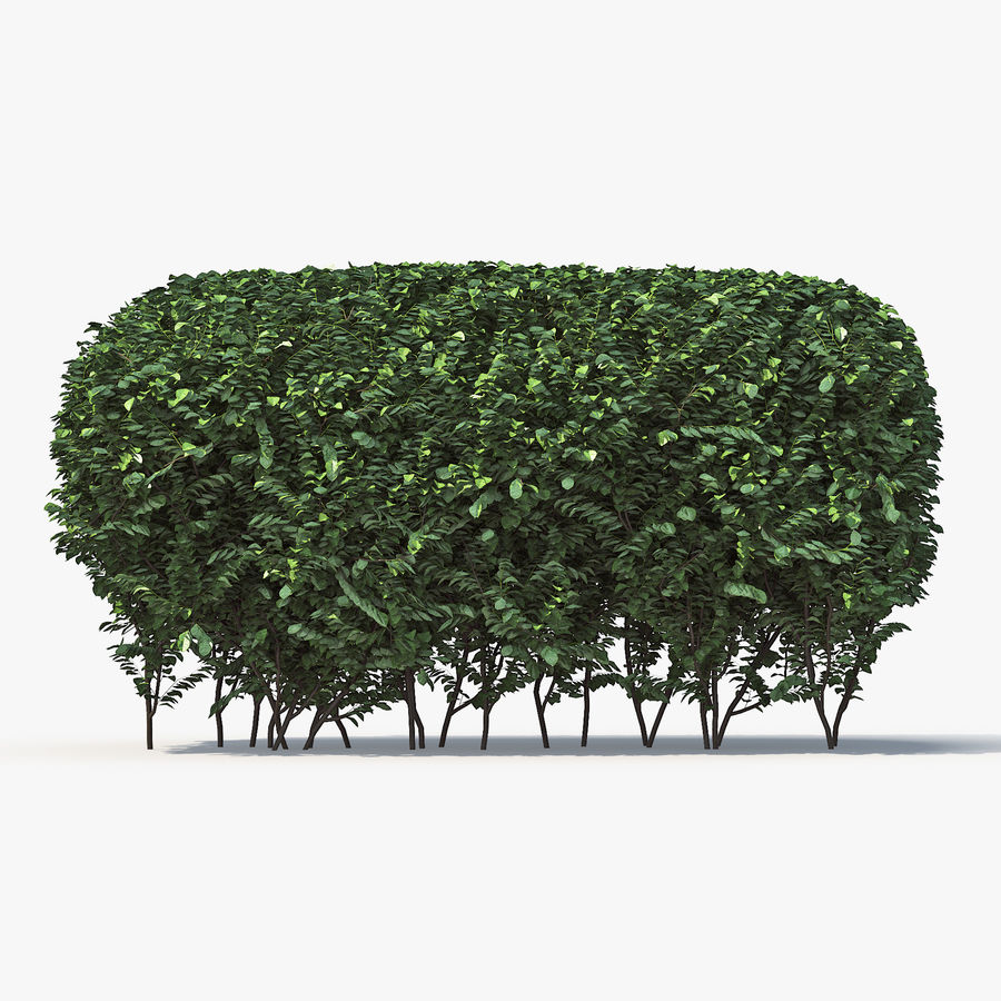 Boxwood (buxus) royalty-free 3d model - Preview no. 4