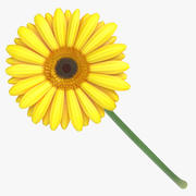 Gerbera - Yellow(1) 3d model