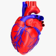 Человеческое сердце 3d model
