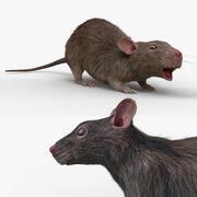 sıçan RIGGED FUR 3d model