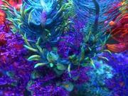 Pacco animato di piante di barriera corallina 10 3d model