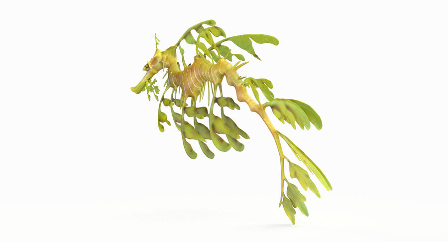 Leafy Sea Dragon royalty-free 3d model - Preview no. 7