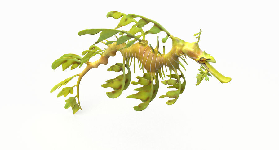 Leafy Sea Dragon royalty-free 3d model - Preview no. 4